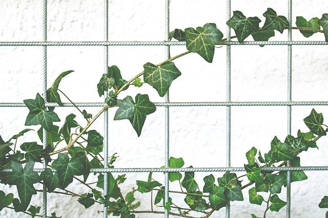 Wall Gardens photo