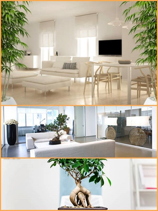 Feng shui office. When using Feng Shui in any area, there are spots known as Bagua where these items should be used. Therefore, first spot these areas in your office. #fengshui